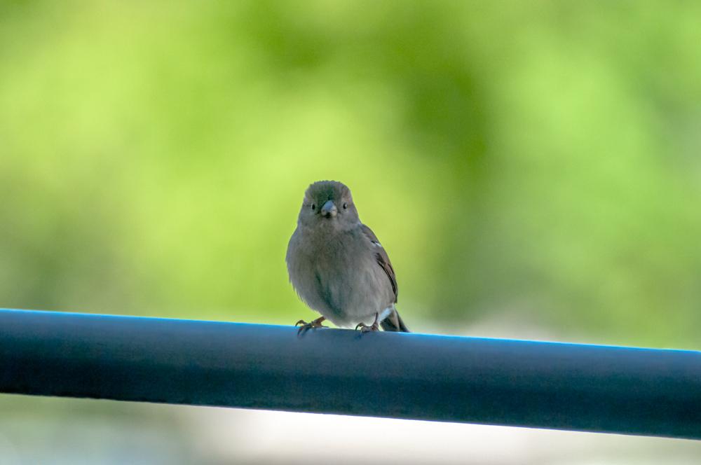 [Animaux] Mini moi Oiseau43