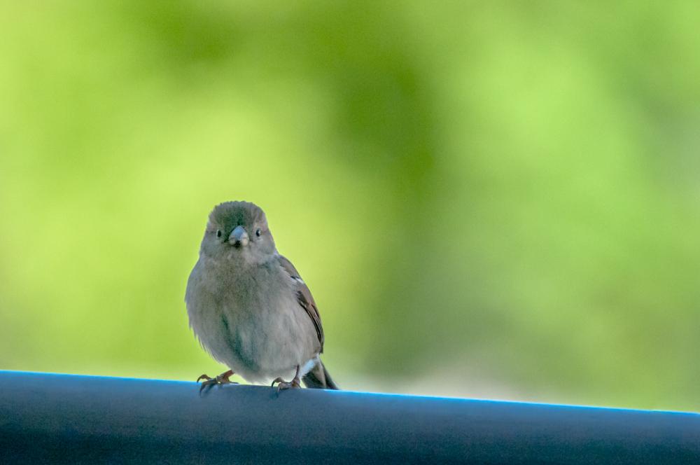[Animaux] Mini moi Oiseau45