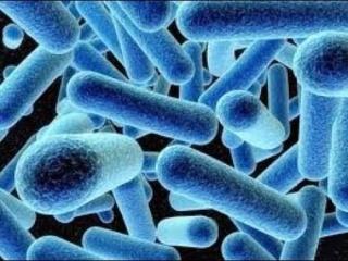 البكتيريا الزرقاء Hqdefa13