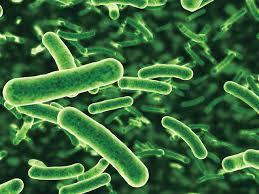 البكتيريا المفيدة في جسم الانسان Images13