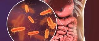 البكتيريا المفيدة في جسم الانسان Tbl_ar11