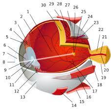 الجهاز البصري Tzolzo64