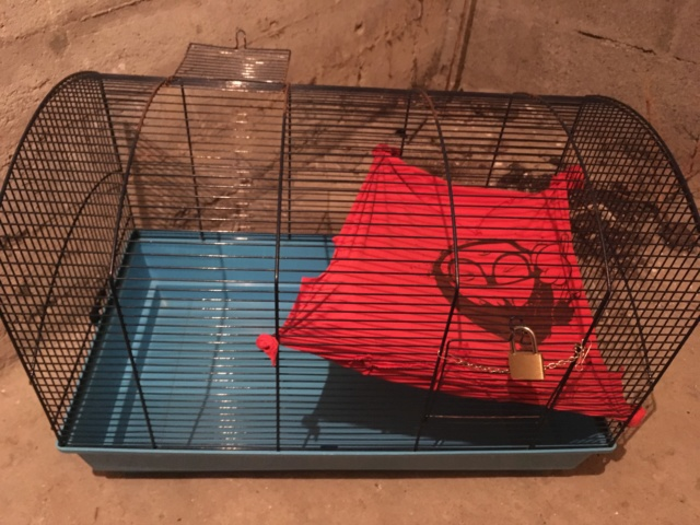 Vends cage Zeno 2 Savic + accessoires Img_2614