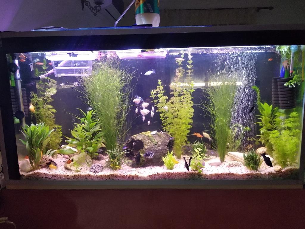 mon bac 200l avec une centaine de poissons Img_2010