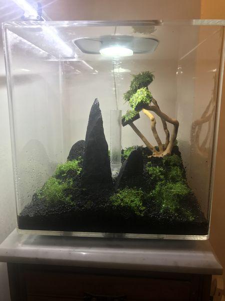 Lancement de mon aquarium avec la méthode DSM 314df210