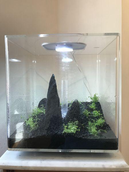 Lancement de mon aquarium avec la méthode DSM 352aa410