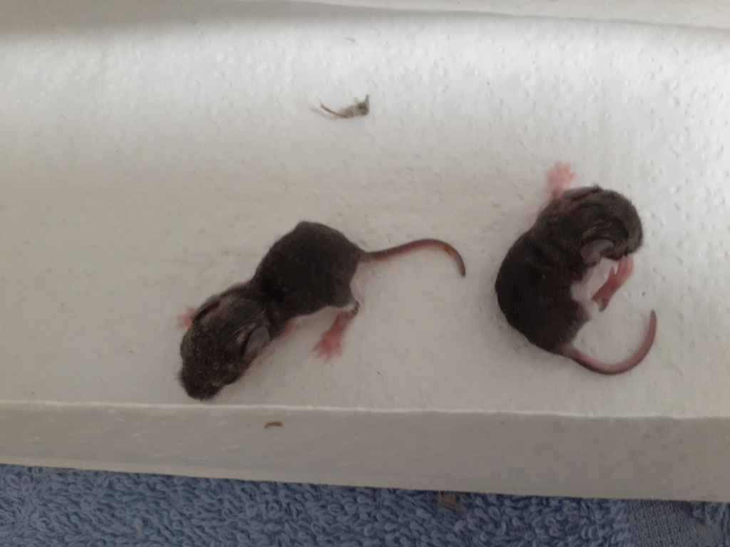Never had mice or rats as pets before... 20200710
