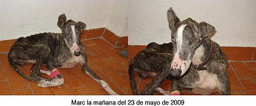 MARC, dans la rue, en Espagne - A L'ADOPTION - Marcds10