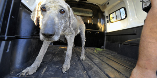 45 chiens à l'abandon dans un sale état à perpignan !!! Une510