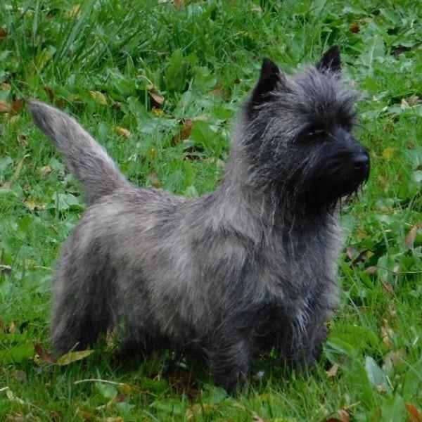 MUESLY Cairnette de presque 3 ans  Reservée Fullsi16