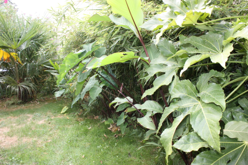 Les Jardins de Demetrius - Page 2 Img_7411