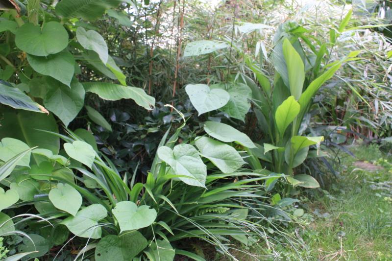 Les Jardins de Demetrius Img_7418