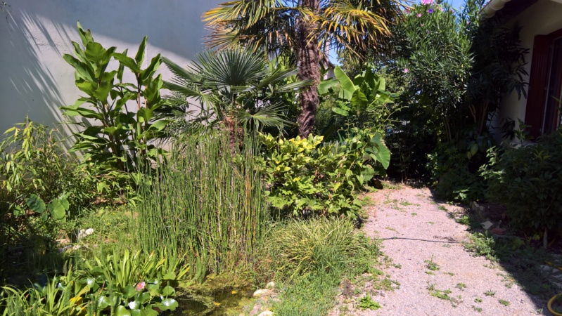 Les Jardins de Demetrius - Page 2 Wp_20117