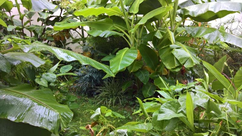 Les Jardins de Demetrius Wp_20123