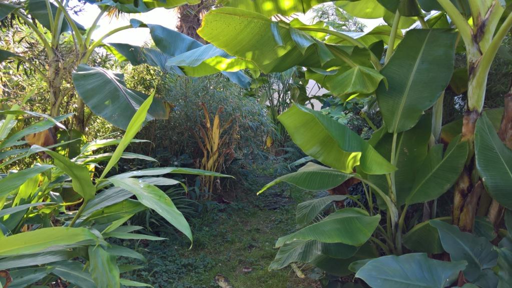 Les Jardins de Demetrius Wp_20126
