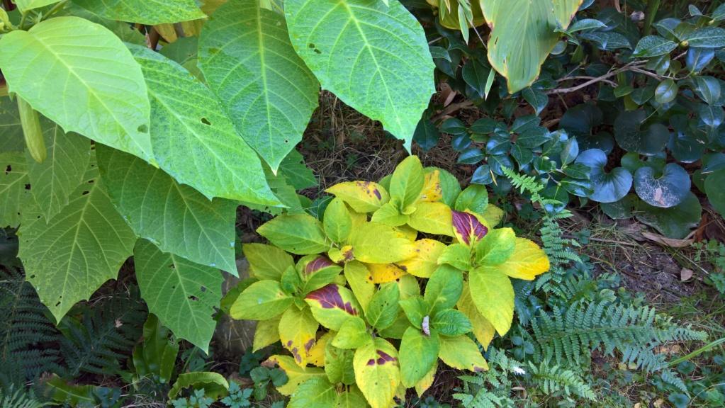 Les Jardins de Demetrius Wp_20127