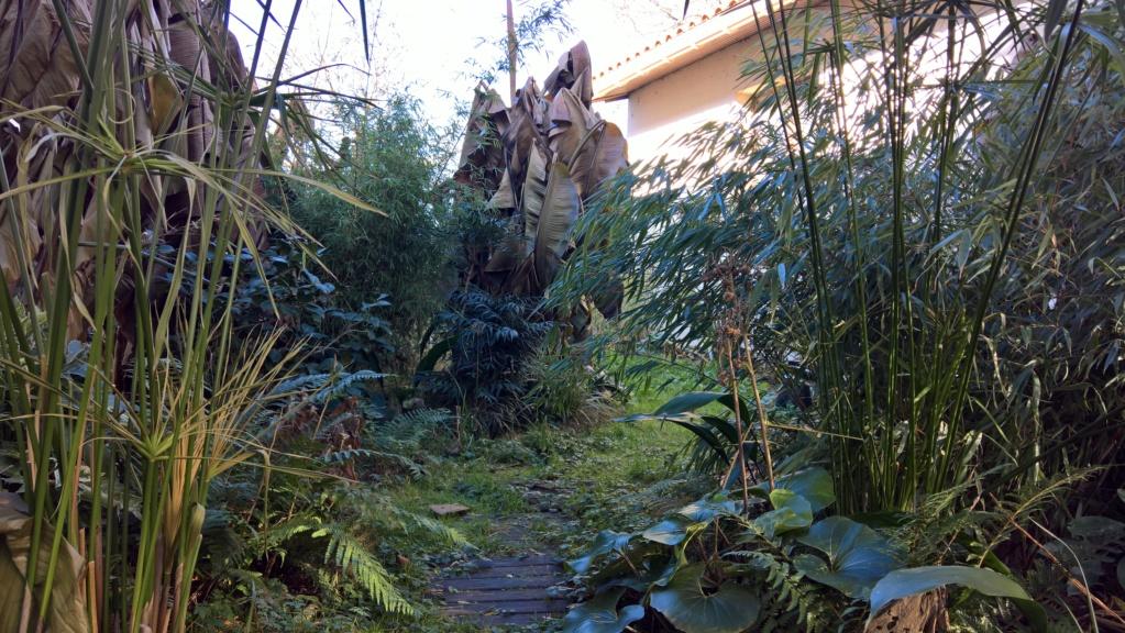 Les Jardins de Demetrius Wp_20129
