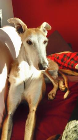 Barbas douce barbuda ,un coeur à prendre Scooby France/ Adoptée - Page 22 Dsc_3316