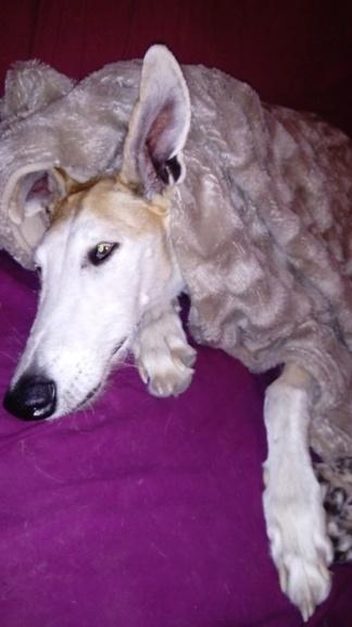 Barbas douce barbuda ,un coeur à prendre Scooby France/ Adoptée - Page 37 Dsc_4215