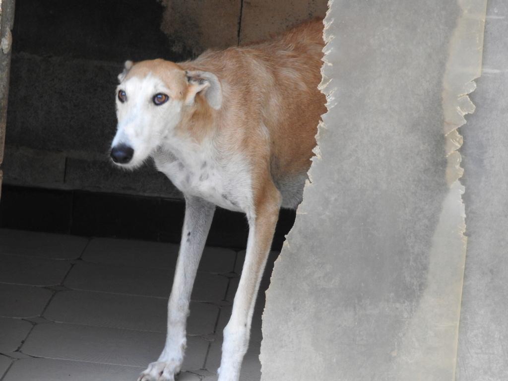 Barbas douce barbuda ,un coeur à prendre Scooby France/ Adoptée - Page 33 Dscn0217