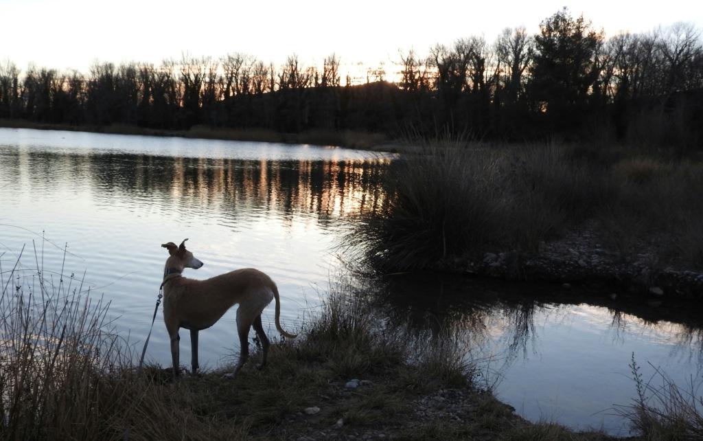 Barbas douce barbuda ,un coeur à prendre Scooby France/ Adoptée - Page 36 Dscn3412