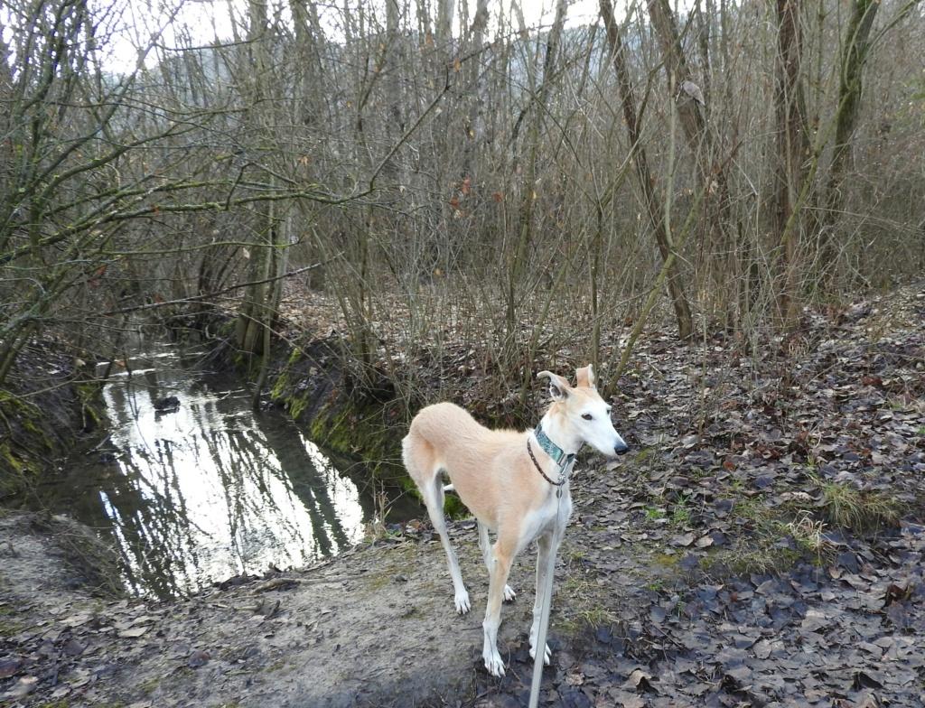 Barbas douce barbuda ,un coeur à prendre Scooby France/ Adoptée - Page 36 Dscn3516