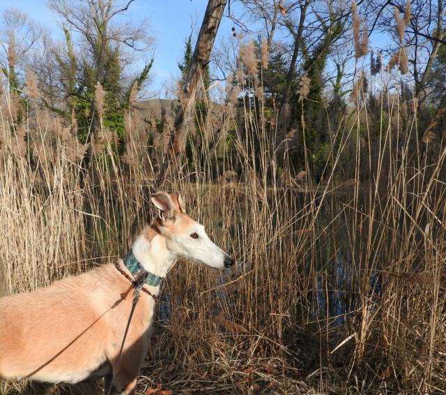 Barbas douce barbuda ,un coeur à prendre Scooby France/ Adoptée - Page 37 Dscn3622