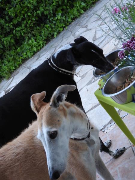 Barbas douce barbuda ,un coeur à prendre Scooby France/ Adoptée - Page 38 Dscn4110