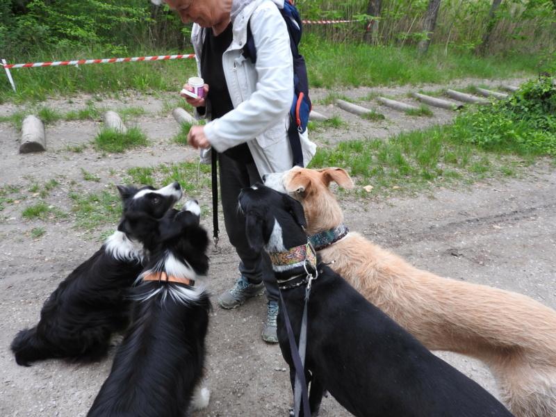 Barbas douce barbuda ,un coeur à prendre Scooby France/ Adoptée - Page 39 Dscn4116