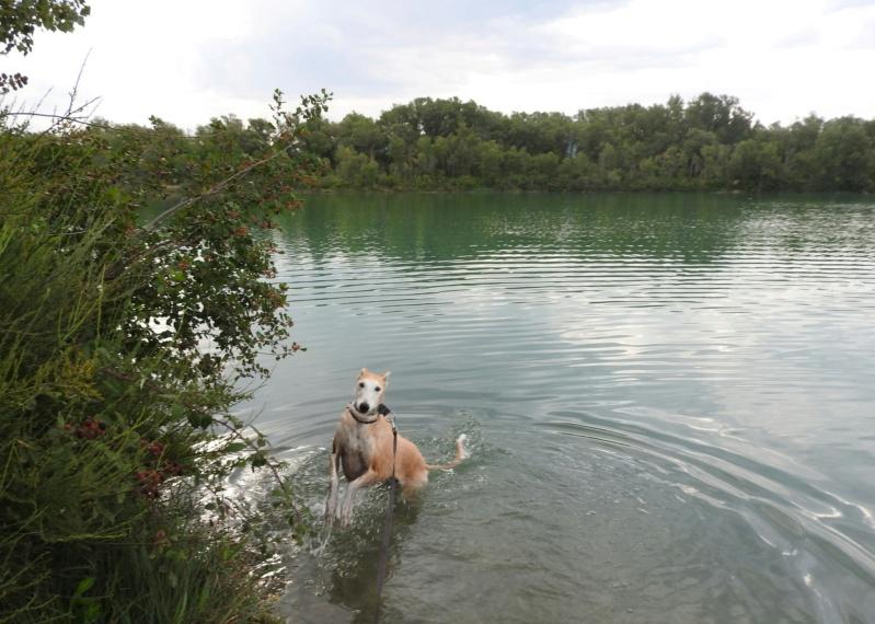 Barbas douce barbuda ,un coeur à prendre Scooby France/ Adoptée - Page 41 Dscn4523