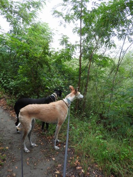 Barbas douce barbuda ,un coeur à prendre Scooby France/ Adoptée - Page 42 Dscn4713