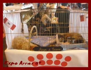 Expo D'Arras 09 Expo_a12