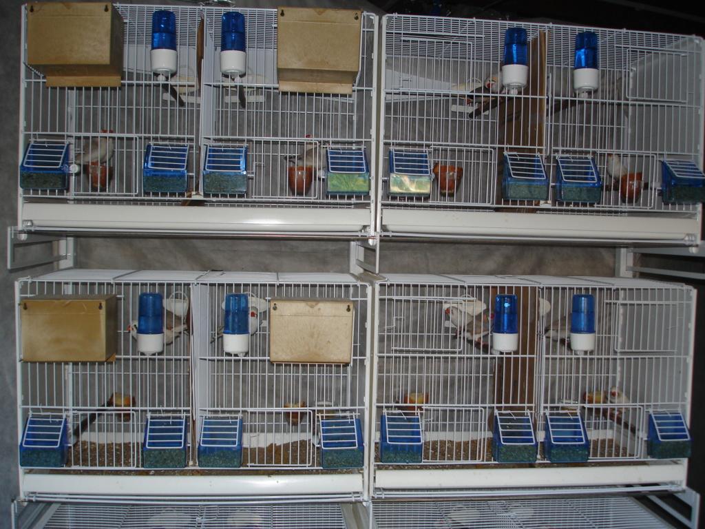 Mes cages pliables avec le chariot Dsc00210