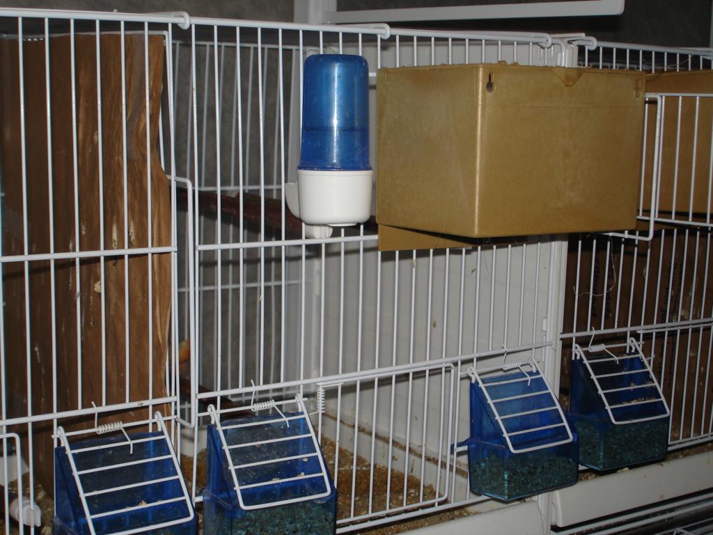 Mes cages pliables avec le chariot Dsc00211