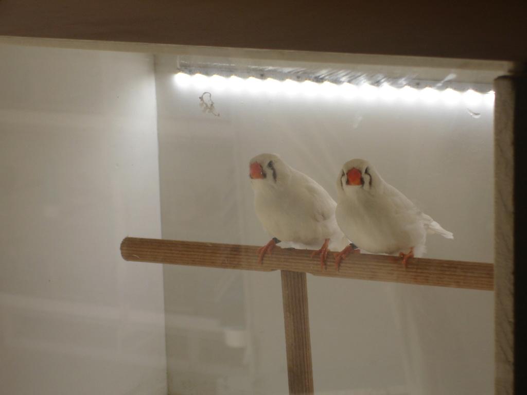 Quelques uns de mes oiseaux Dsc00341