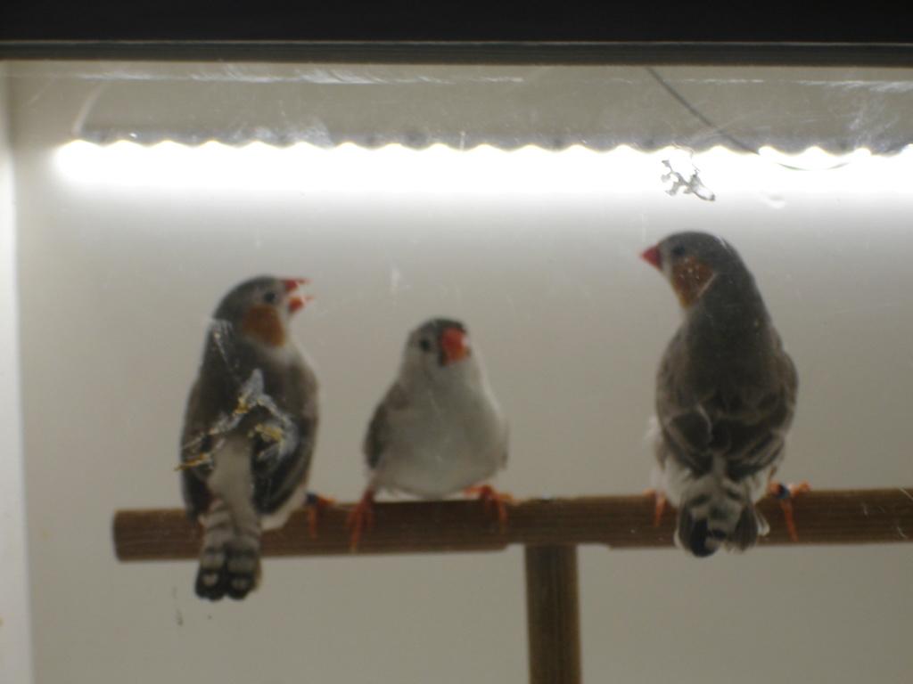 Quelques uns de mes oiseaux Dsc00345
