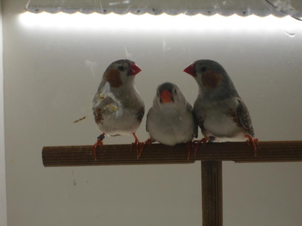 Quelques uns de mes oiseaux Dsc00346
