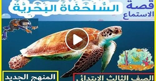 """منهج جديد لغة انجليزية قصة الاستماع السلحفاة البحرية """"فيديو"""" 11959310"""