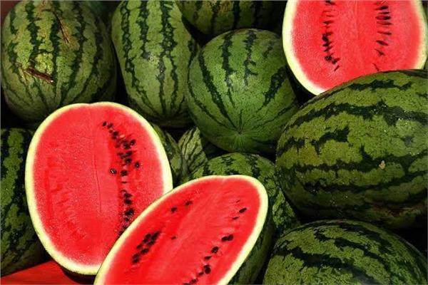 نصائح الخبراء للمواطنين قبل شراء  البطيخ بعد بعد ارتفاع حالات التسمم  20210515