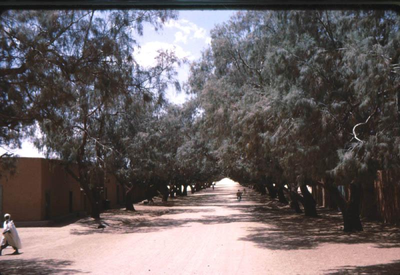 Travaux au sahara 488_bi11