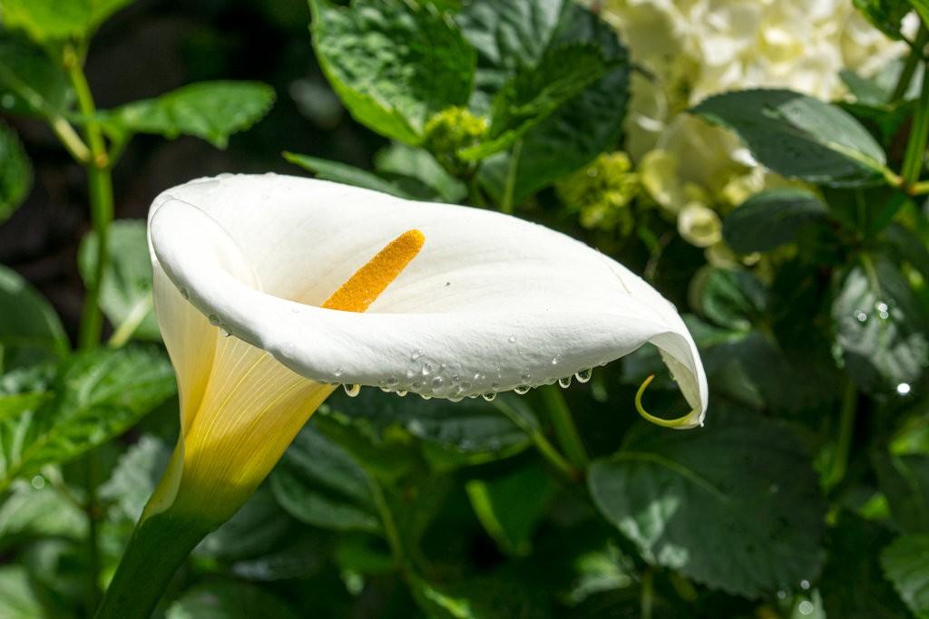 """Concours photo du mois de novembre 2019 - Thème : """"Une fleur que vous aimez"""" (terminé) Dsc_0068"""
