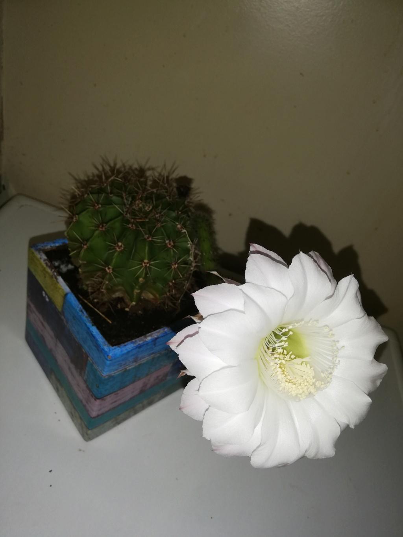 Offrons nous des fleurs Img_2010