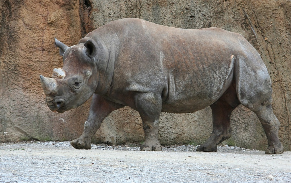 IMAGES trouvées sur le Net Rhino10