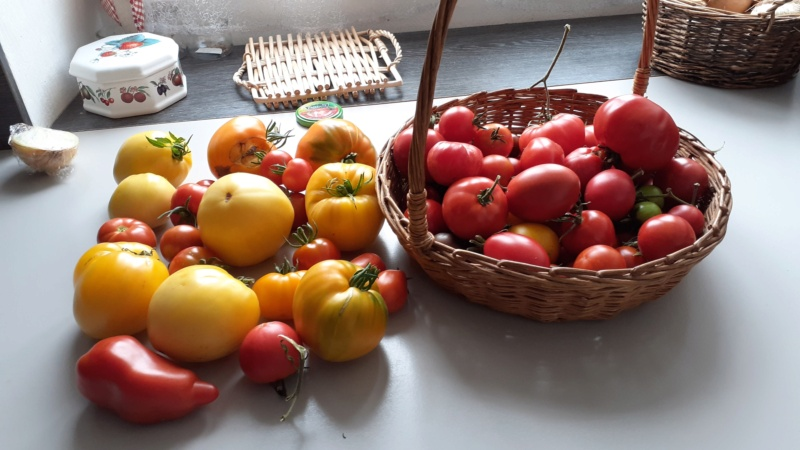 Tomates 2019 - 2020 et 2021 - Page 30 20210812