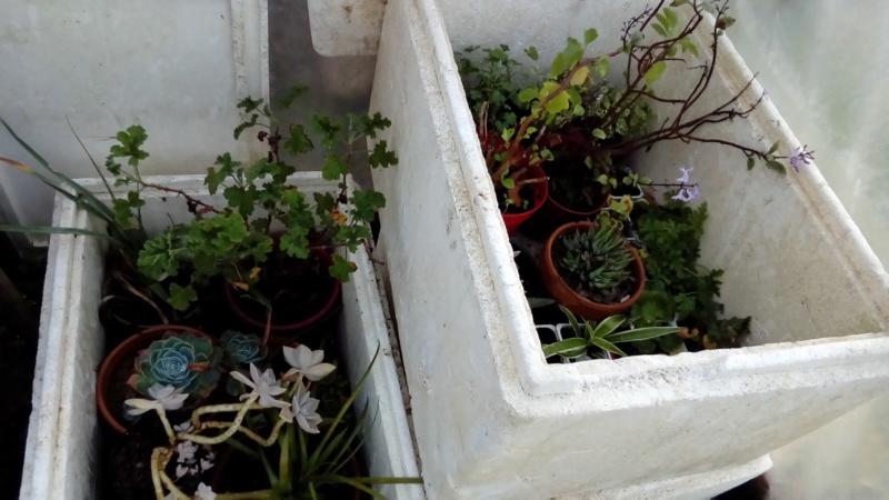 Hivernage des plantes  P_201137