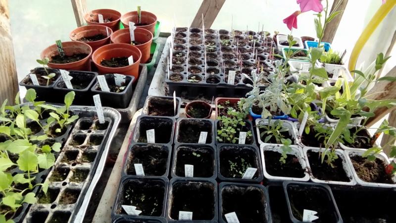 Temps écoulé entre semis et levée, puis récolte  - Page 2 P_201188