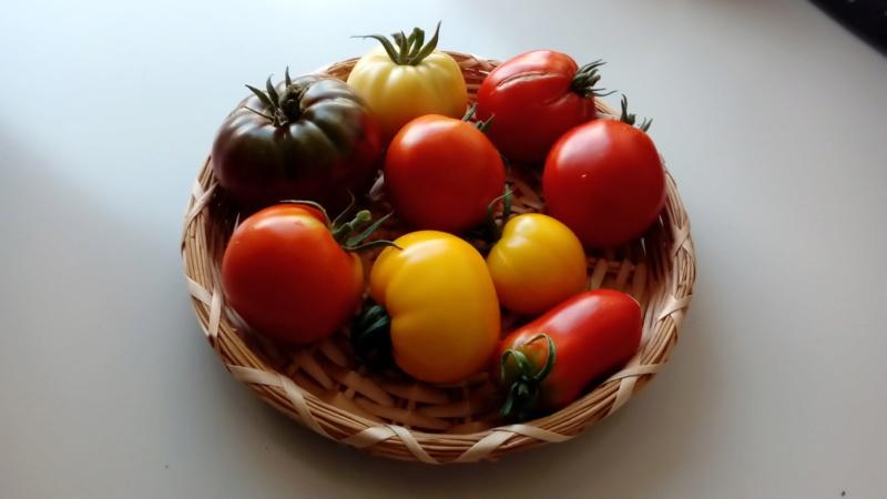 Tomates 2019 - Page 9 P_201474