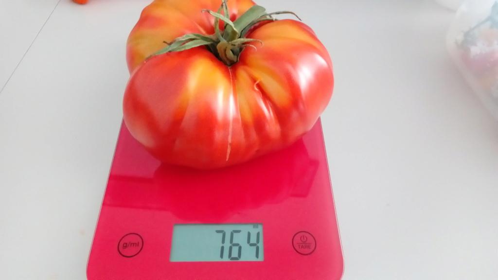 Tomates 2019 - Page 15 P_201535