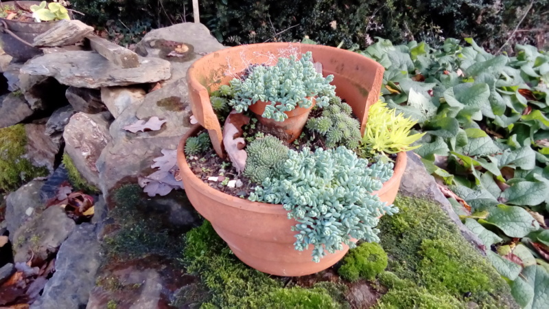 Mini jardin P_201579