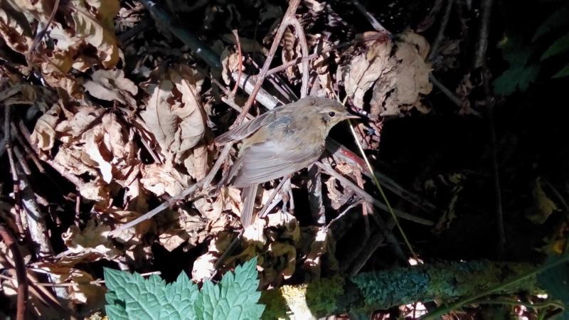 les oiseaux et petites bêtes au cours de nos balades - Page 38 P_202381